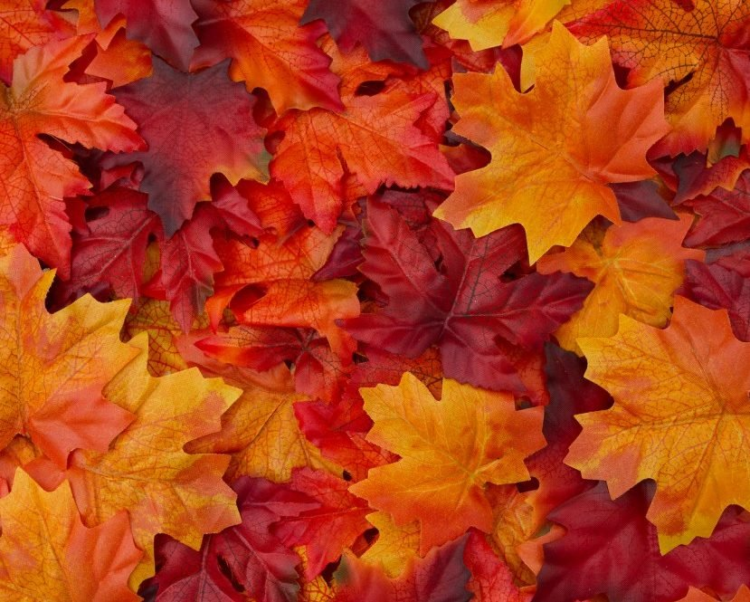 bigstock-Autumn-Leaves-Background-101076908-1024x683